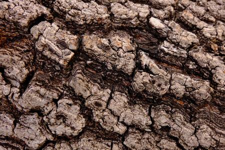 Bark texture background, Wood texture background, Rough surface Banque d'images - 122393514