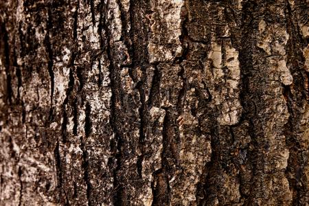 Bark texture background, Wood texture background, Rough surface Banque d'images - 122393517