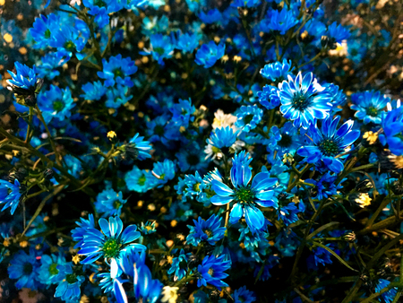 Deep blue yipso flower background, Blue flora garden background, Tiny blue flower Banque d'images - 122393915