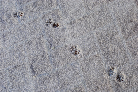 Cat footprints in a white snow