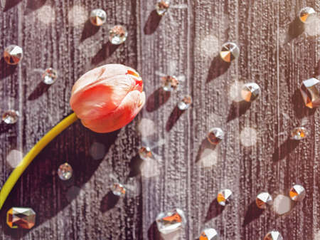A red tulip is on a dark wooden background. There are flickering crystals.