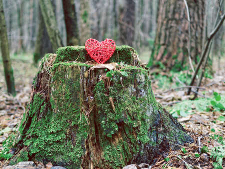 A solitary wicker red heart is on an old stump with moss. A concept for depicting withering or the emergence of feelings, love, care for nature and ecology