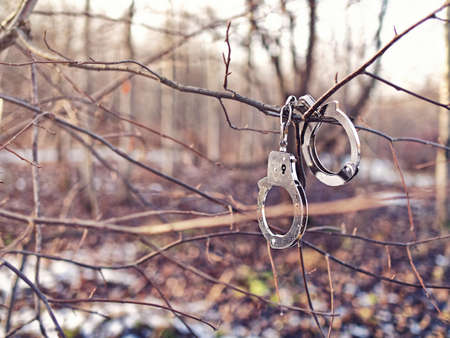 Steel handcuffs hang on a tree branch without leaves. Background of autumn or winter forest. Stockfoto