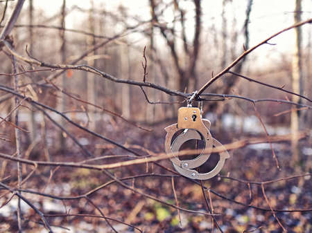 Steel handcuffs hang on a tree branch without leaves. Background of autumn or winter forest. Stock Photo