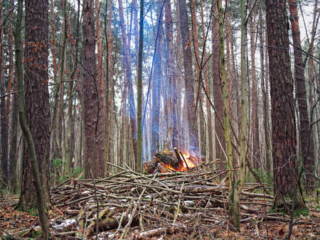 A bright fire burns in the autumn forest. The cut off branches are burnt. The smoke rises smoothly Stock fotó