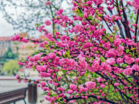 Blossoming tree in a spring park. Beautiful spring background
