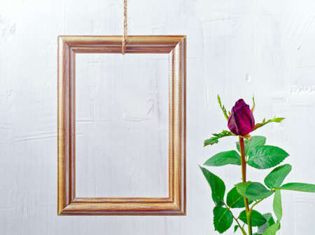 Flower composition. A rose of tiger color and a wooden golden photo frame are on a white jagged background. Layout for congratulations, social media background. Copy space. 免版税图像