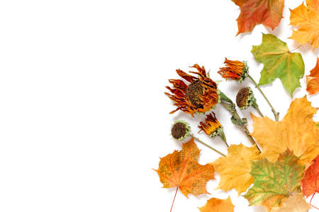Autumn composition. Dried flowers, leaves and plants isolated on white background. Flat lay, top view, copy space.