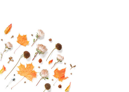 Autumn composition. Dried flowers, leaves and plants isolated on white background. Autumn, fall, thanksgiving day concept. Flat lay, top view, copy space. Stock fotó