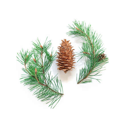 Minimalist Christmas layout. A big cone and natural branches of a pine with green needles are on a white background. New Year, winter concept. Flat lay. Top view.