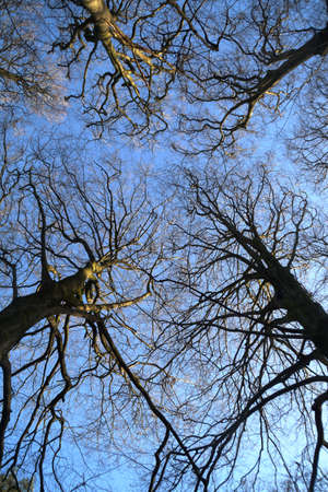 treetops: Treetops and blue sky Stock Photo