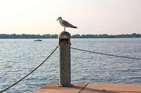 Seagull on a pier column by water on a sunny summer day  photo