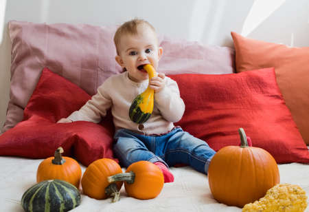 Sweet cute baby girl eating pumpkin wearing a knitted shirt and jeans sitting on her bed full of different colorful autumn pumpkins photo