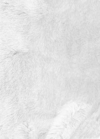 white fur: Blanco textura de fondo de pieles. Primer Foto de archivo
