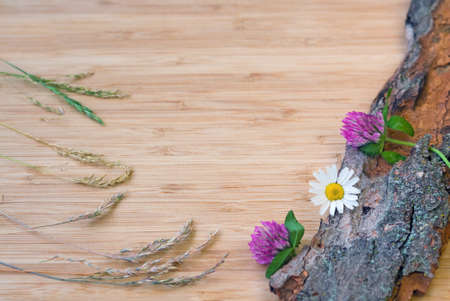 Closeup of clover and camomile flowers with stems and green leaves with a bunch of spikelets on old wooden bark with rough texture background on a light wooden board, card, copy space photo