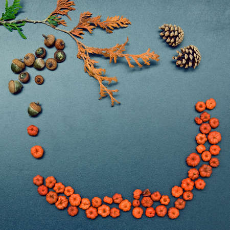 Closeup still life of cedar, arborvitae leaf branch,  heap of tiny red and orange pumpkin pods and acorns, two pine cones. Autumn, Fall, Halloween concept. Grungy frame, background with copy space for text. Banco de Imagens