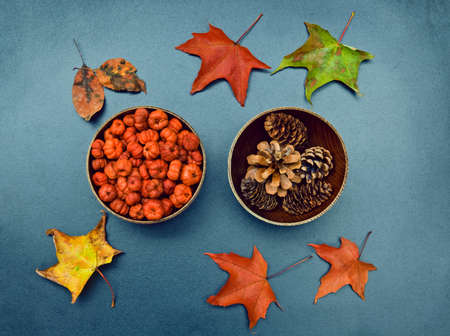 Closeup still life of two wooden bowls with tiny orange pumpkin pods, pine cones and colorful autumn birch and maple leaves around. Autumn, Fall, Halloween concept. Grungy frame, background, card. photo
