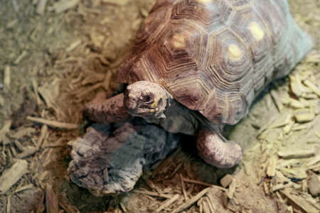 animal in wild: Closeup portrait of turtle, neck, shell. Zoo animal wild Stock Photo