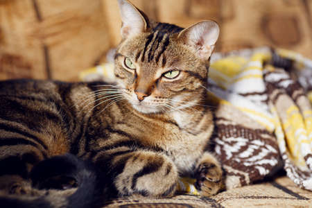 Closeup portrait of cute adorable tabby cat  photo