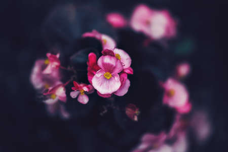 Beautiful fairy dreamy magic pink purple flowers on faded blurry background, toned with instagram filters in retro vintage style with film effect, soft selective focus, copyspace for text Stock Photo