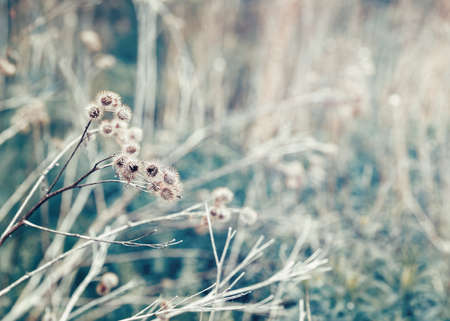 washed out: Beautiful fairy dreamy magic burdock thorns, toned with  vsco filter in retro vintage color pastel washed out style, soft selective focus with lens sun flare, copyspace for text Stock Photo