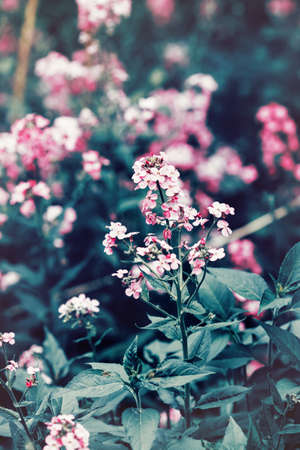 dark pastel green: Beautiful fairy dreamy magic red pink flowers with dark green blue leaves, blurry background, toned with  filter in retro vintage color pastel, soft selective focus, shallow depth of field
