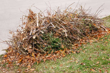 Pile of cut old dry tree branches with autumn fall leaves on them, waste garbage trash on ground, background texture Foto de archivo