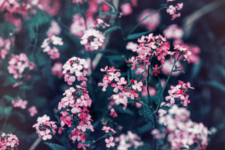 artsy: Beautiful fairy dreamy magic red pink flowers with dark green blue leaves, blurry background, toned with  filter in retro vintage color pastel, soft selective focus, shallow depth of field