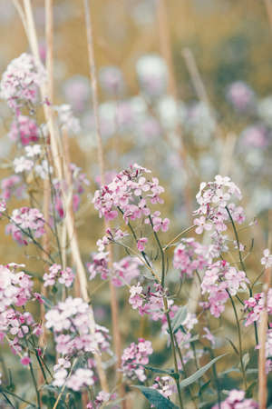 Beautiful dreamy red pink wild flowers, blurry background, toned with  vsco filter in retro vintage color pastel style, soft selective focus, shallow depth of field