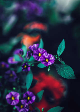 artsy: Beautiful fairy dreamy magic purple red flowers with dark green blue leaves, blurry background, toned with  filters in retro vintage color style, soft selective focus, shallow depth of field