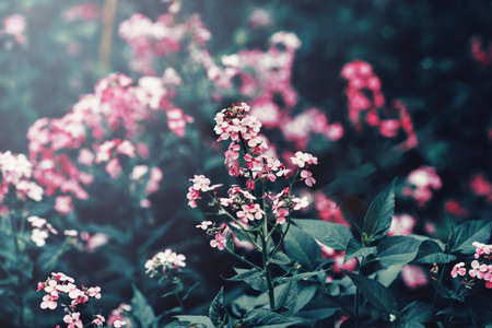 dark pastel green: Beautiful fairy dreamy magic red pink flowers with dark green leaves, toned with  filter in retro vintage washed out pastel, soft selective focus, lens sun flare, copyspace Stock Photo