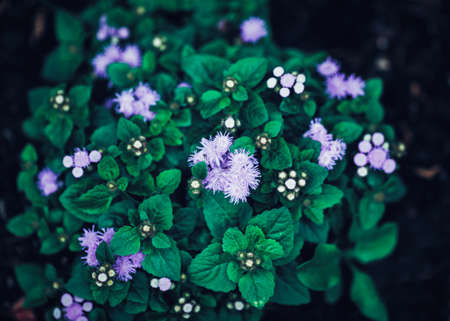 artsy: Beautiful fairy dreamy magic purple flowers with bright green leaves, toned with  filters in retro vintage style effect, soft selective focus, blurry background Stock Photo