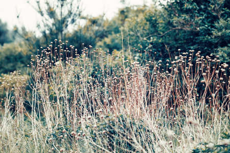 washed out: Beautiful fairy dreamy magic wild field flowers, grass and straws, toned with  vsco filter in retro vintage washed out pastel style, soft selective focus, lens sun flare, copyspace