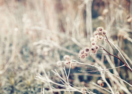 washed out: Beautiful fairy dreamy magic burdock thorns, toned with   filter in retro vintage color pastel washed out style, soft selective focus with lens sun flare, copyspace for text