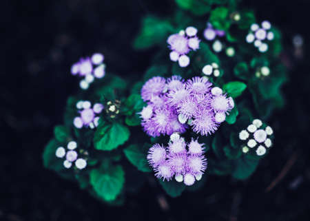 Beautiful fairy dreamy magic purple flowers with bright green leaves, toned with  filters in retro vintage style effect, soft selective focus, blurry background Stock Photo