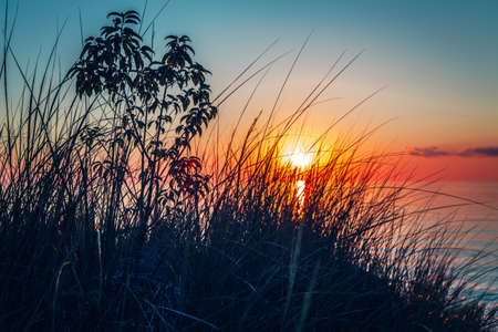 pinery: Beautiful evening sunset landscape at Canadian Ontario lake Huron in Pinery Park, orange blue red sky sun, view through grass, low angle. Amazing summer sunset view on the beach