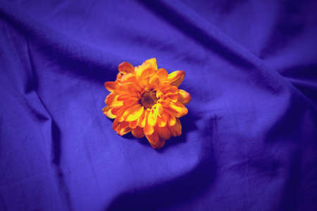 one sheet: Blurred blurry soft focus closeup of bright small yellow red flower on folded wrinkled blue violet purple bed sheet