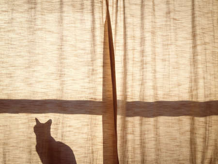 shadow: Silhouette shadow of a small cute cat sitting alone on the window sill behind the curtain in sunlight on sunset, copy space for text Stock Photo