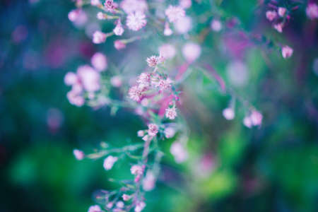 Beautiful fairy pink white small flowers on colorful dreamy magic green blue purple blurry background, soft selective focus, macro closeup nature image shot, copyspace for text