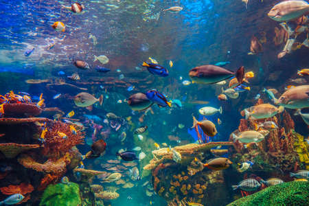 Shoal group of many red yellow tropical fishes in blue water with coral reef, colorful underwater world, copyspace for text, background wallpaper