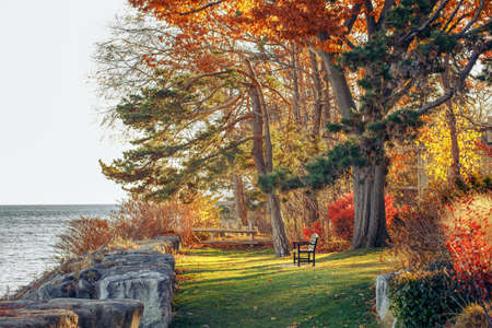Beautiful autumn fall forest surreal colors of fantasy landscape with trees branches and red yellow leaves on the ground, park with one lonely old bench on bank shore near water Foto de archivo