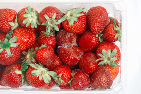 Closeup macro shot image of rotten strawberry with white large mold in plastic transparent box container. Stock Photo