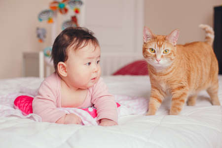 Portrait of cute adorable Asian mixed race baby girl four months old lying on bed in bedroom with cat. Relationship of home domestic animal pet with child kid. Childhood funny candid moment Imagens