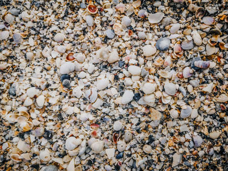 Closeup macro of many different small colorful red yellow blue white seashells on sand beach. Textured natural marine nautical background. Toned with retro vintage filters.