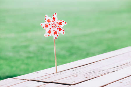 Windmill whizzer with red maple leaves on white background stuck into wooden table outside outdoors in park. Toy with Canadian flag symbol during Canada Day national celebration on July 版權商用圖片