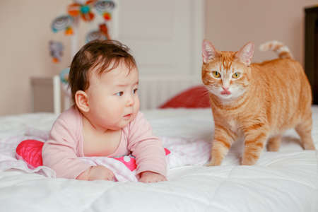 Portrait of cute adorable Asian mixed race baby girl four months old lying on bed in bedroom with cat. Relationship of home domestic animal pet with child kid. Childhood funny candid moment 写真素材