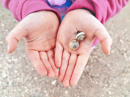 Closeup macro of child hands palms holding two little small forest garden yellow striped snails molluscs. Summer kids entertainment activity. Happy childhood lifestyle. Stock fotó