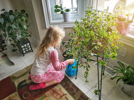 Cute little preschool blonde Caucasian girl watering flowers in morning. Child taking care of plants. Home everyday kids chores errands help.