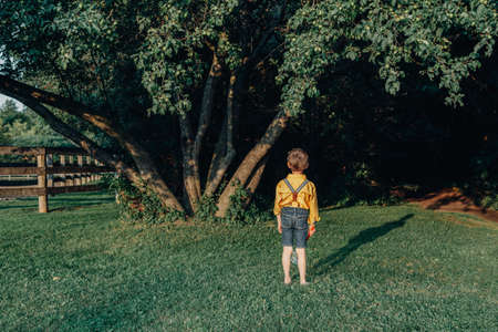 Little preschool Caucasian boy in yellow shirt with butterfly net walking alone in frightful horrible forest with tall trees at sunset. View from back behind. Fear of future life concept. Imagens