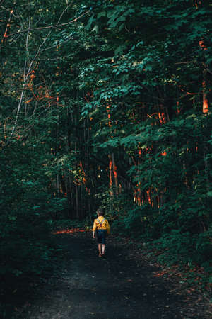 Little preschool Caucasian boy in yellow shirt and jeans shorts with suspenders walking alone in frightful horrible forest with tall trees at sunset. View from back behind. Fear of future life concept Imagens